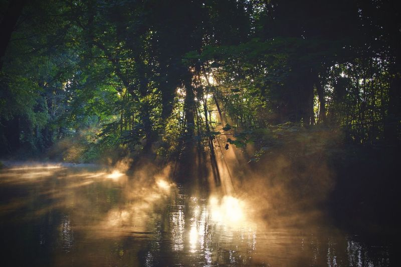 morning fog and sunrays playing it out at the creek Tree Water Nature Beauty In Nature Scenics Forest Tranquility Morning Morning Light Fog Foggy Foggy Morning Outdoors Tranquil Scene No People Dawn Dawn Of A New Day Stream Park Autumn Autumn Colors Leaves Nature