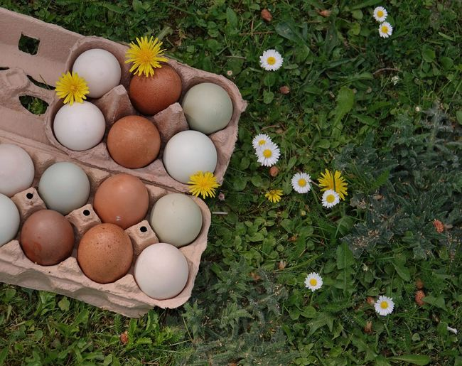 Egg Grass High Angle View Plant Freshness Nature Food Food And Drink Vulnerability  Fragility No People Flowering Plant Green Color Flower Day Easter Egg Field White Color Easter Land