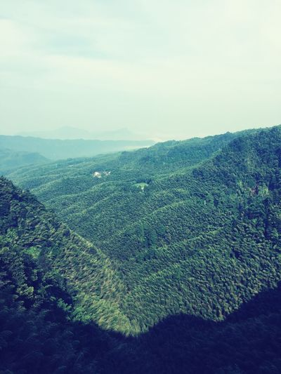 Check This Out Hello World Relaxing Mountain View Mountains Traveling Nature Shunanzhuhai Yibin Sichuan China Top View Sunny Day Bamboo Bamboo Sea