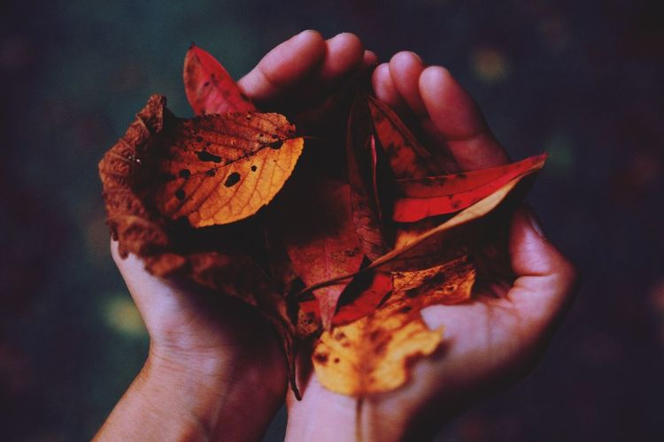 Cropped Hands Holding Autumn Leaves