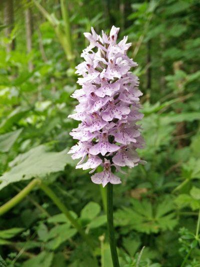 Rare flower Flowers :) Mountainflowers Sauris