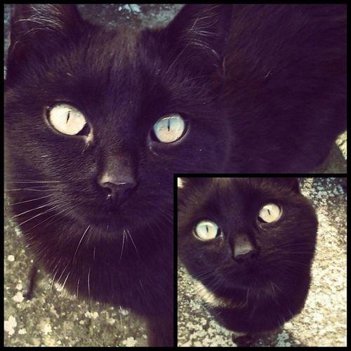 Mille sfumature di nero. Cat BLackCat Eyes Animals pet gatto igersitalia igersAbruzzo picoftheday instamood