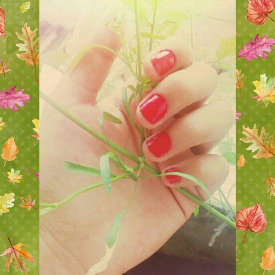 My Nails  Nature Sunnyday☀️ Plants 🌱