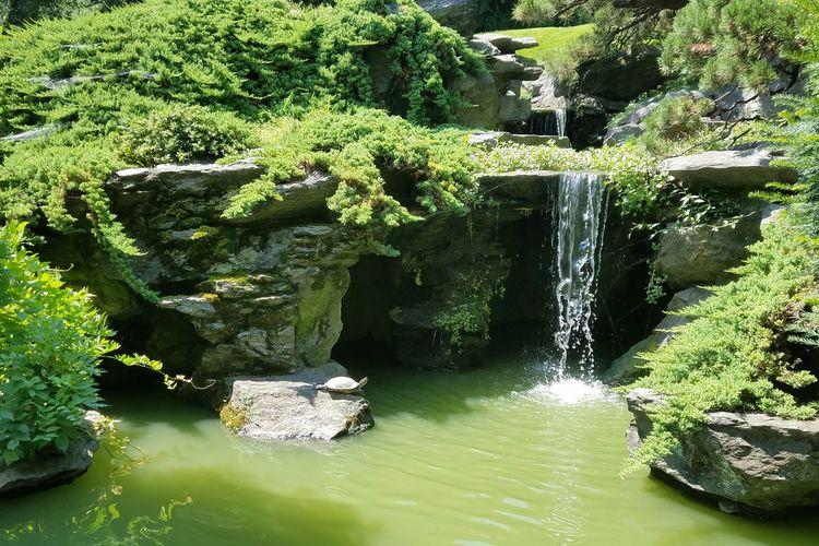 -Water Feature- Brooklyn Botanic Garden New York City Japanese Garden Lake And Waterfall Color Palette Summer Exploratorium