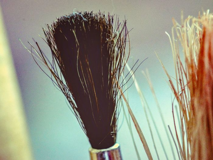 Brushes Water