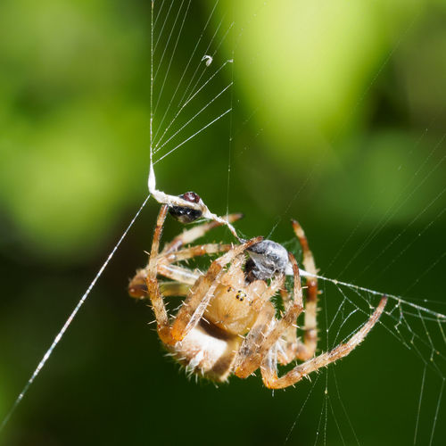 Spider and prey Animal Leg Close-up Day Nature No People Outdoors Prey Spider Spider Eyes Spider Web Web