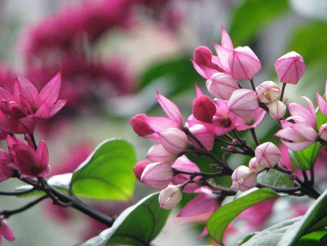 何の花だろう? Flower 台湾