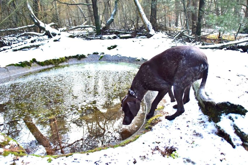 we found tiny pond in the forest! i think most people dont know this place. its kind of our secret water ✨ Nature Beauty In Nature Tree Area Exploring Walking Outdoors Cold Temperature Tranquil Scene No People Freshness Waterfront Pond Water I Love My Dog Dog Gsp My Bestfriend My Girl Nikon