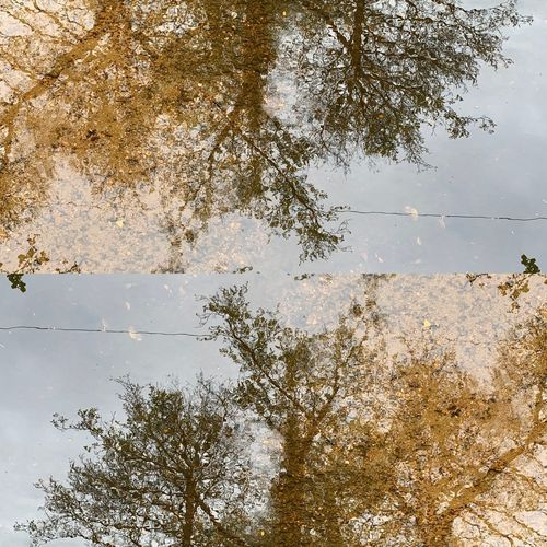 Mirrored puddle