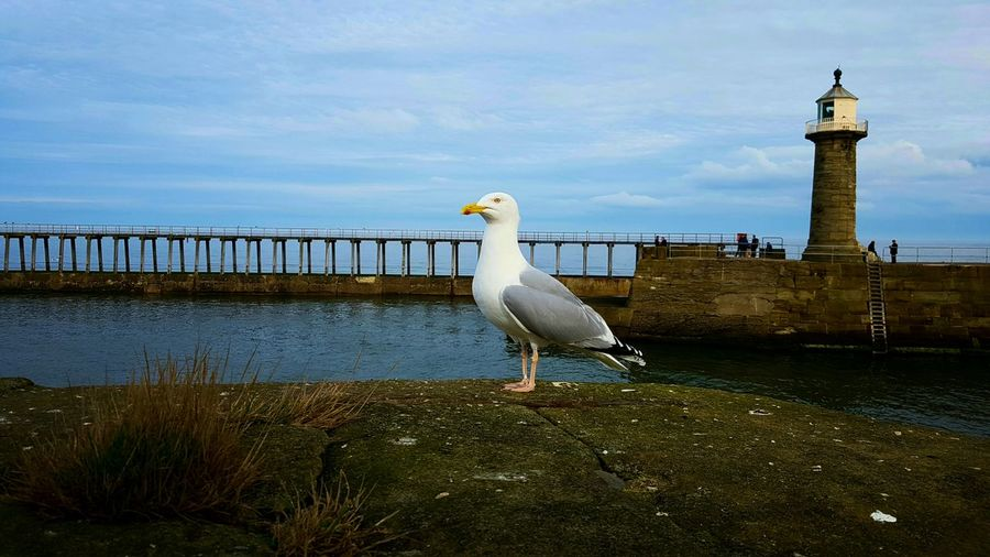 Bird Animal Themes Full Length Animal Wildlife Animals In The Wild Outdoors No People Day Sky Water Nature Representing Perching Seagull Tourist Travel Destinations Fishing Pier Seaside Sea Lifestyles Boat TheWeekOnEyeEM Photo Of The Day
