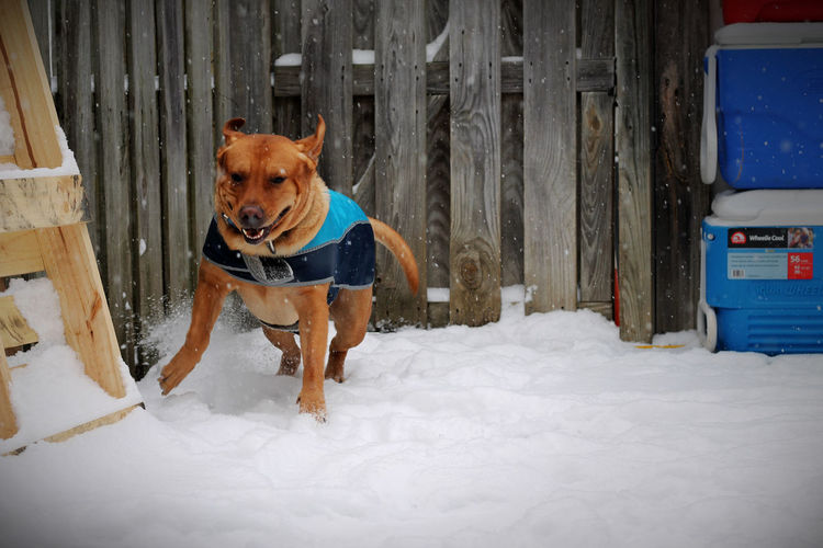 Tennessee Days EyeEm Selects EyeEmNewHere Dog Snow Pets Winter Cold Temperature One Animal Animal Domestic Animals No People Outdoors Animal Themes Mammal Day
