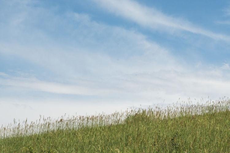 Landscape - Where Earth and Air meet