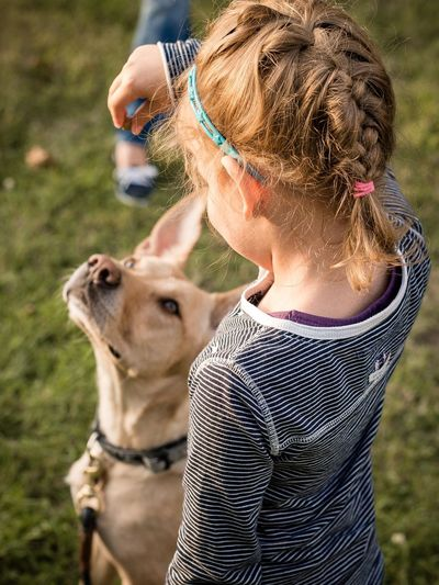 Rear View Of Girl Giving Treat To Dog