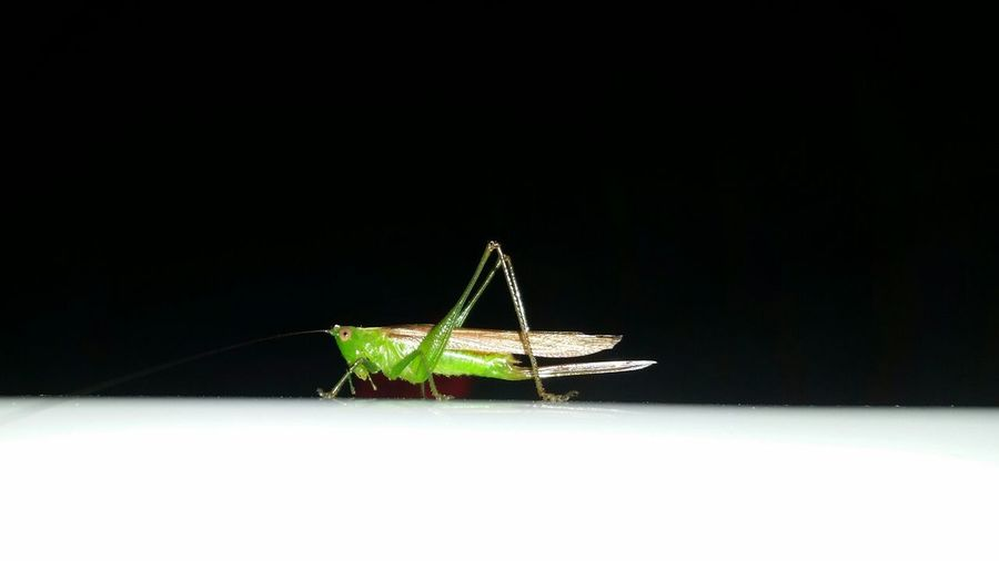 Bright Green Grasshopper sitting on my car. Contrast The Purist (no Edit, No Filter) The Minimalist Minimalism