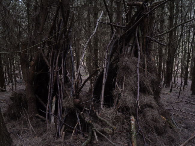 Delamere Forest Beauty In Nature Blair Witch Blair Witch Project Forest Gothic Hobbits Outdoors Tree Woods