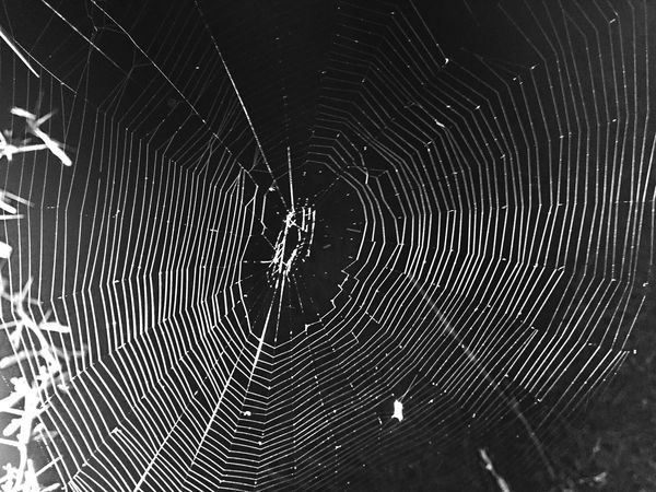 Spider Web Spider Fragility Web One Animal Complexity Animal Themes Natural Pattern Spinning Nature No People Intricacy Beauty In Nature Outdoors Close-up Survival Arthropod Weaving Day
