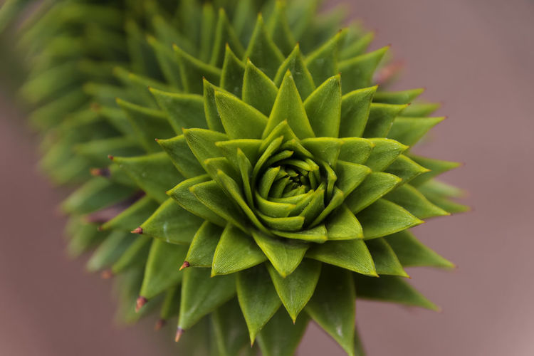 Unusual plant from Latin America Beauty In Nature Cactus Close-up Day Focus On Foreground Freshness Green Color Growth Leaf Natural Pattern Nature No People Outdoors Plant Plant Part Potted Plant Selective Focus Spiked Spiky Succulent Plant