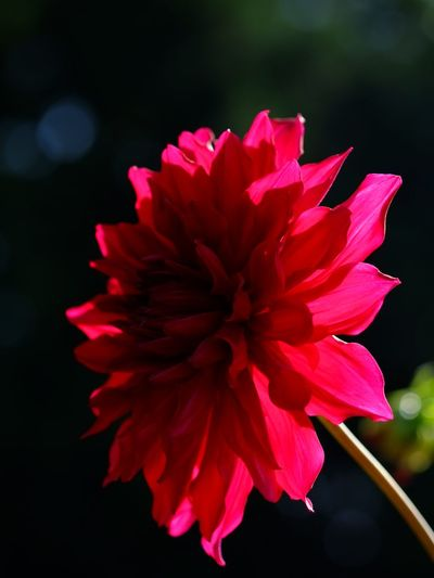 Red Red Flower Daria EyeEm Nature Lover Natural Nature_collection Autamn Naturelovers Nature Flowers