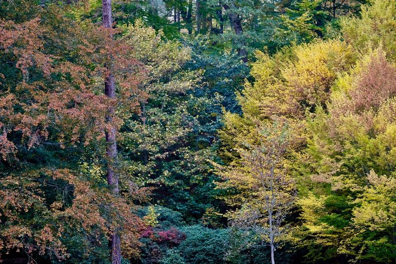 Tree Plant Autumn Beauty In Nature Tranquility Growth Tranquil Scene Change Day Land Forest No People Nature Scenics - Nature Non-urban Scene Outdoors Idyllic High Angle View Green Color Foliage