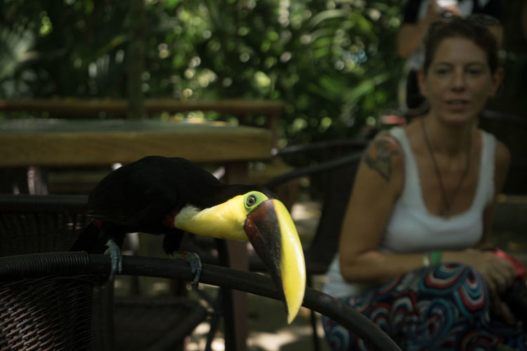 Costa Rica Animal Themes Animals In The Wild Bird Nature One Animal Real People Tucan