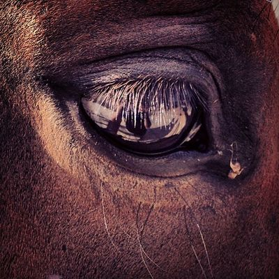 Cavalli Horse_of_instagram Riding Horseriding Equitazione équitation Riding Horse Horselife Riders Selleria Testiera Horsesofinstagram Horsestagram Horsepassion Lovers Free Time Leisure Life Style Grosseto Maremma Maremmatoscana Toscana italia ridersitalyhorseyhorsebackridinghorseloversLike4Like