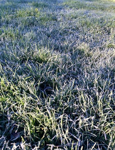 White grass Grass Field Growth Nature Day Outdoors Shades Of Winter Plant No People Backgrounds Tranquility Beauty In Nature Full Frame Close-up