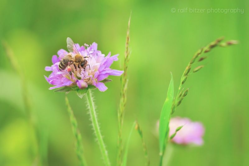 Flower Fragility Nature Beauty In Nature Insect Growth Freshness Purple Animals In The Wild One Animal Petal Plant No People Flower Head Pollination Blooming Day Outdoors Animal Wildlife