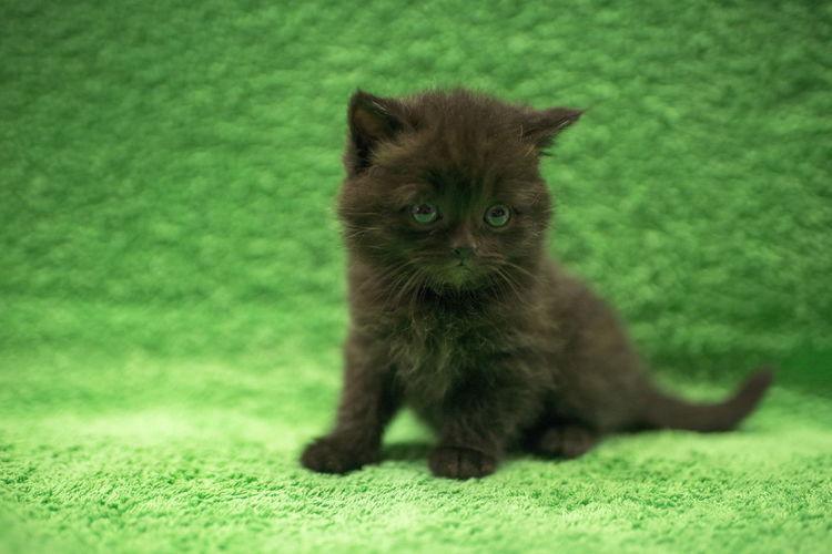 Portrait of kitten sitting on green leaf