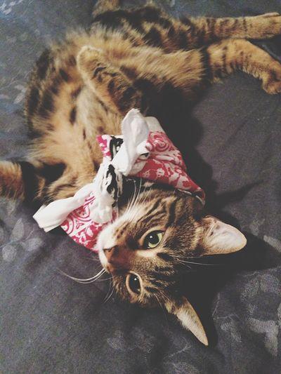 K I K I Kitty Insane Crazy