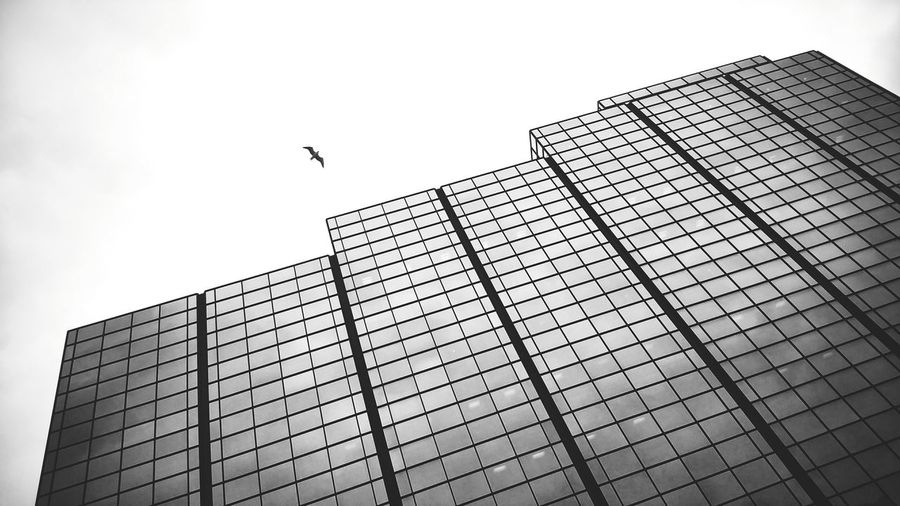 Monochrome Photography Bnw Monochrome Glass Building Glass Reflections Building Sky And Bird Reflection Obsession Patterns & Shapes Lines And Patterns Black And White Photography Reflection On Building Glass Building And The Sky High Contrast Reflections And Shadows Reflected Glory Bnw Photography Postcode Postcards