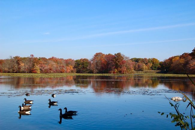 Landscape water reflections tranquil scene beauty in nature autumn in New York Water Tree Sky Reflection Bird Group Of Animals No People