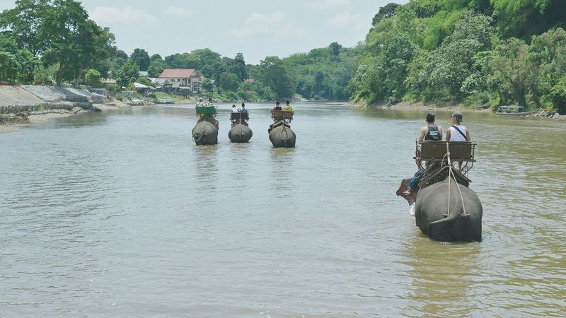 Elephant ride! Elephant Water River Mountains People Thailand Chiangrai Animals Ride Shallow Water