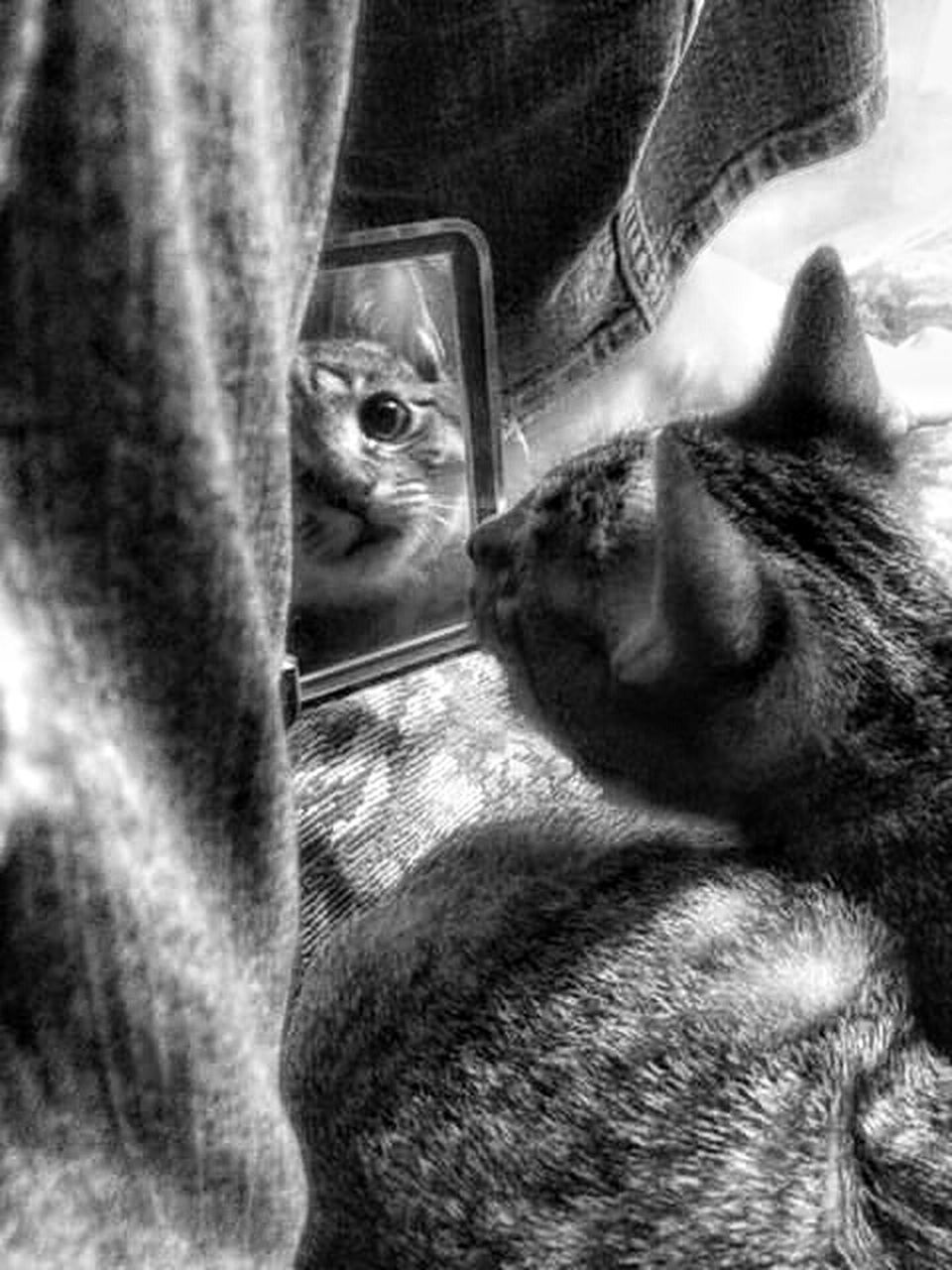 one animal, animal themes, pets, domestic cat, domestic animals, mammal, feline, indoors, no people, close-up, portrait, day