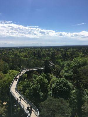 Baumkronenweg Landscape Peaceful Place Naturelovers Sky Cloud - Sky Nature Beauty In Nature Plant Scenics - Nature Tranquility Outdoors Tree The Architect - 2018 EyeEm Awards The Traveler - 2018 EyeEm Awards