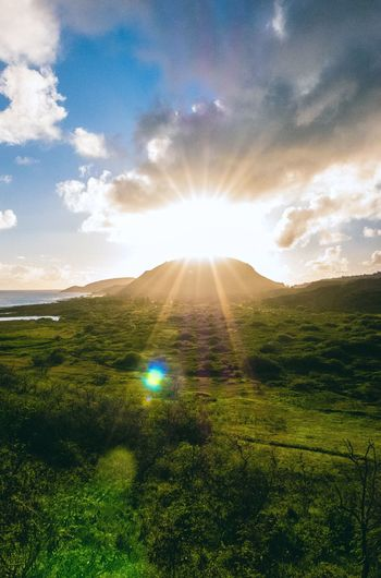 I really have start taking more landscapes living in Hawaii. Sky Sunbeam Sunlight Sun Lens Flare Beauty In Nature Nature Scenics Tranquility Landscape Outdoors Cloud - Sky Field Grass Day Idyllic No People Growth Solar Flare (null)No Way Jose Lx100 Hawaii Makapuu Lighthouse