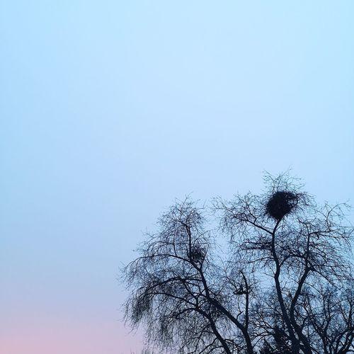 December Pink Sky December Winter Sky Blue Sky Clear Sky Winter Outdoors Birdnest Tree Cold Temperature Frozen Cold