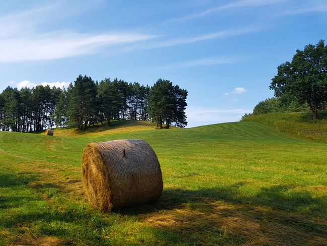 Nature Hay Bale Hayrolls Grass Countryside Grassland Beauty In Nature Sunny Summer Trees Landscape Landscape Photography Landscape_Collection Landscape_photography Agriculture Field Outdoors Hill Goldenlight Mobile Mobile Photography Mobilephotography Smartphone Smartphonephotography Smartphone Photography