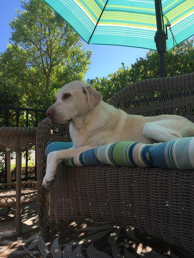 Dog Pets One Animal Domestic Animals Tree Animal Themes Day