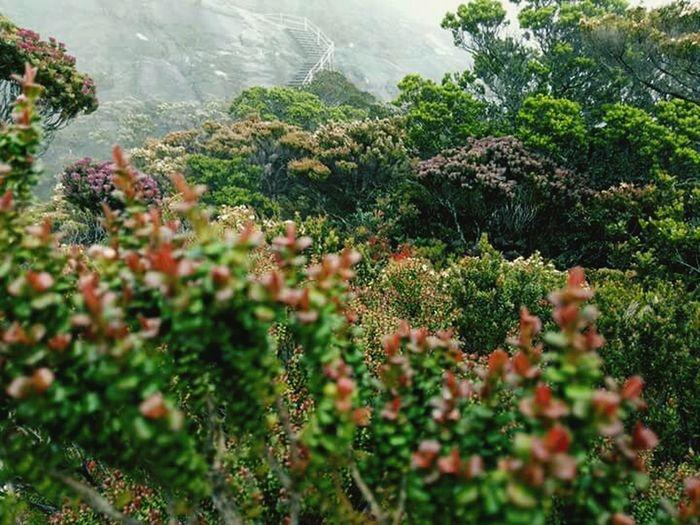 Nature On Your Doorstep Freshness Mounth Kinabalu Low Peak, Travel Destinations Hiking