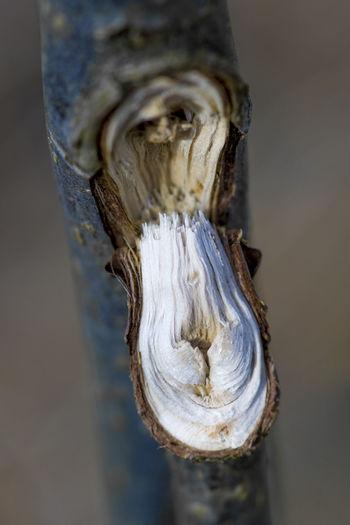 Open Up  Break Broken Close-up Fragile Look Inside Nature Outdoors Pattern Plant Bark Selective Focus Textured  Tree Wood - Material