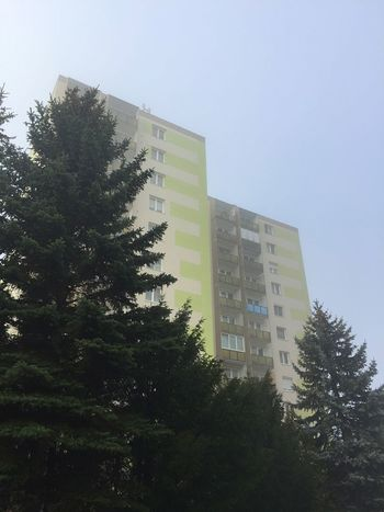 Buildings behind trees Building Tree Pine Yellow Concrete Block Mist Hone Apartment