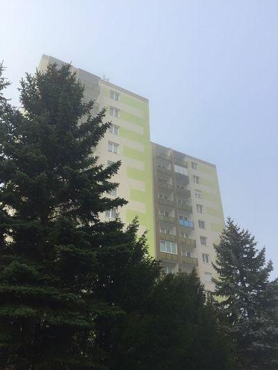 Buildings behind trees Building Tree Pine Yellow Concrete Block Mist Hone Apartment