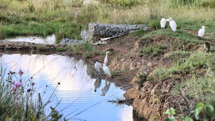 Bird on grass by water