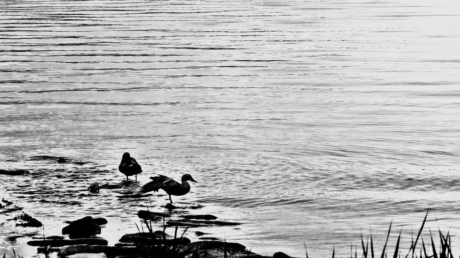 Bird on the lake Bird lake