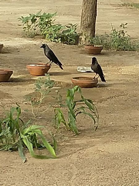 46deg temperature water crisis in world Two Crows Say Water Cricas In The World Save Water And Save Life Tree Plant Growing