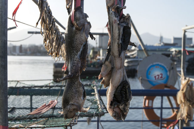 Dongmyeong Port, Sokcho City, South Korea Close-up Day Drying Drying Fish Fishery Village Focus On Foreground Hanging Nautical Vessel No People Octopus Outdoors Rural Scene Sea Sky Water