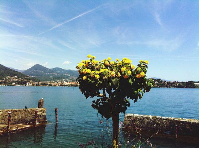 Island Flowers Lake