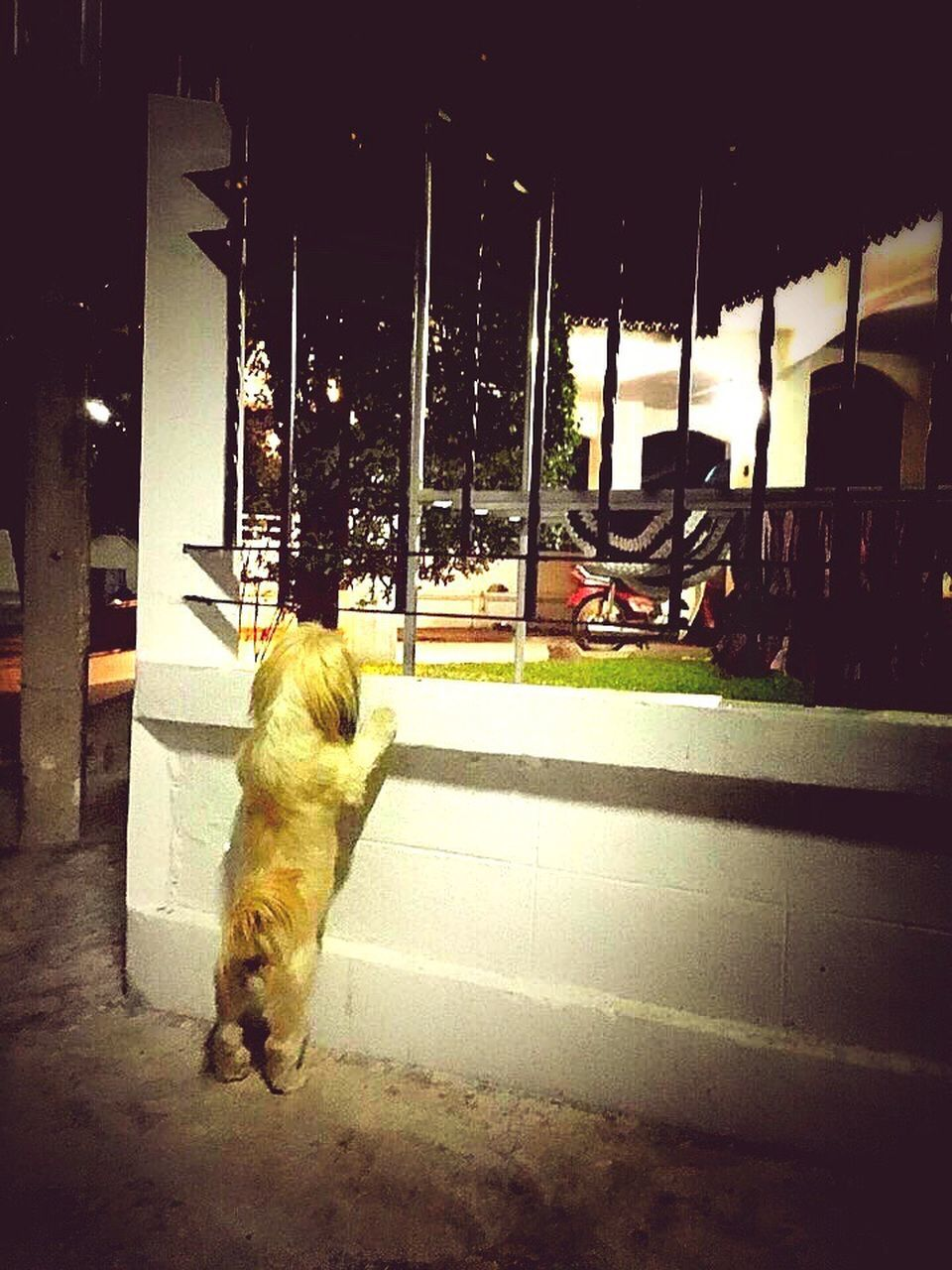 DOG ON ROAD BY NIGHT