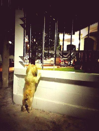 Dog on road at night