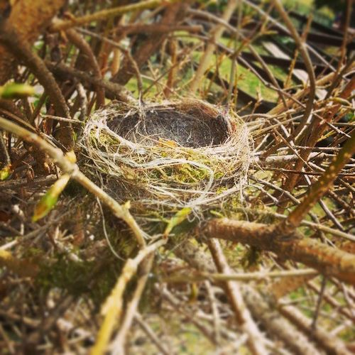 """Nest (Follow Nature )""."